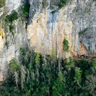 La pared del Dispensari de Camarasa es zona de máximo interés para la flora protegida