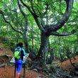 El antiguo camino de Ciñera a Villar del Puerto se ha dotado de pasarelas y paneles informativos  (Anxo Rial)