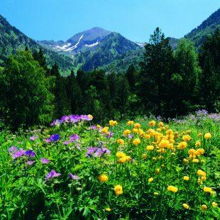 Parque Natural de la Vall de Sorteny