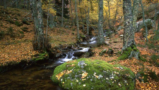 Senda ecológica del Abedular de Canencia. Sierra de Guadarrama  ()