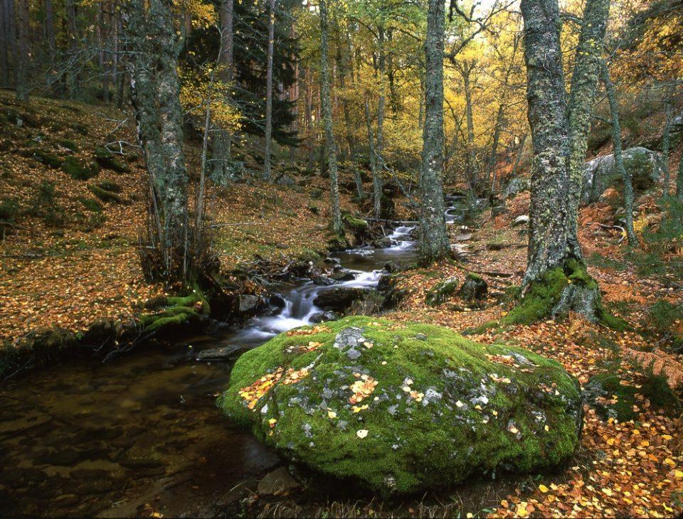 Senda ecológica del Abedular de Canencia. Sierra de Guadarrama