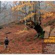 La foto que sirve de apertura del especial otoño 2012 está tomada en el hayedo riojano de Tobía.  (GE)