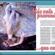 Artículo de lesiones en la revista Escalar nº 87  ()