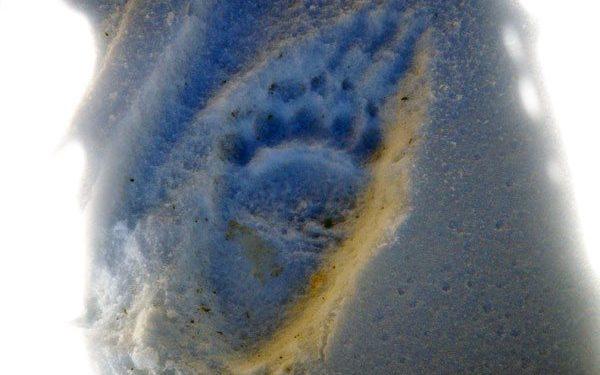 Una de las huellas fotografiadas por Bacelar durante la travesía Dolpo-Mustang (José Ramón Bacelar/desnivelpress.com)