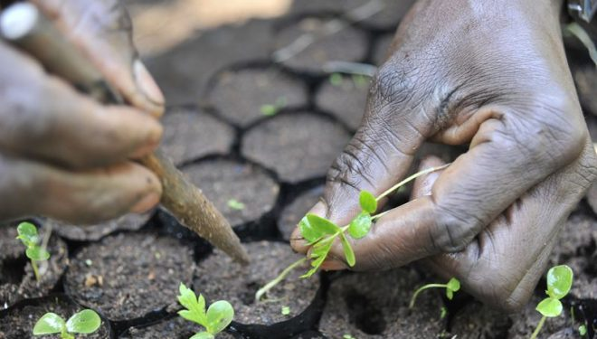 Haglöfs dona un árbol por cada descarga de su aplicación para la reforestación del Lago Victoria  ()