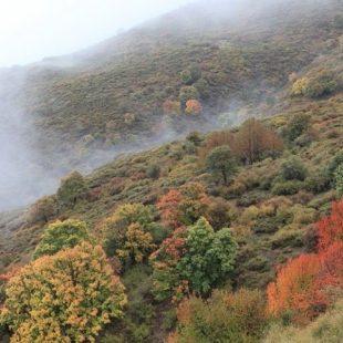 La Dehesa del Camarate constituye uno de los tesoros botánicos más preciados de cuantos posee el Parque Nacional de Sierra Nevada.  (Roberto Travesí)