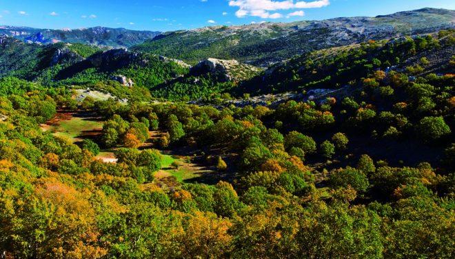 Ruta por el Calar del río Mundo en el robledal de Cotillas  (Antonio Real Hurtado)