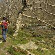 Ruta por las Hoces del río Casaño en el Concejo de Cabrales  (Antonio Rodríguez)