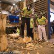 Corte de troncos en el estand de Cercedilla de Fitur 2015  (©Darío Rodríguez)