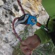 Prueba del asegurador Matik de Camp para el Premio Desnivel de Material 2015  (Javi Bueno)