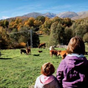 La excursión por el Castañar de la Serenita es muy divertida para los niños que podrán coger castañas y observar animales sin riesgo. (Roberto Redondo)