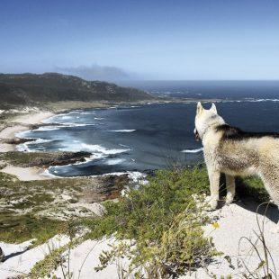 Vistas desde la duna de Monte Branco en el recorrido del Camiño dos Faros  (Pablo Pose)