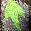 Huellas verdes que señalan algunos tramos del Camiño dos Faros  ()