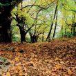 Castañar de Juanar en el futuro Parque Nacional de la Sierra de las Nieves  (Asociación Grupo de Desarrollo Local Sierra de las Nieves)