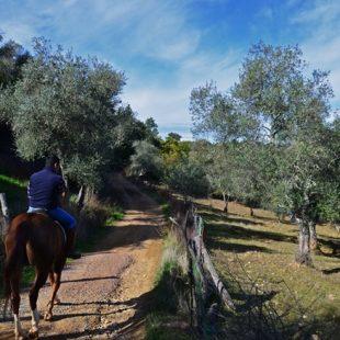 Sendero a caballo en la Sierra de Arcena