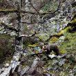 Un oso pardo fotografiado a orillas de un río.  ()
