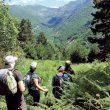 Las excursiones en grupos suelen ser las más comunes en la salida hacia los dominios del Oso Pardo.  ()