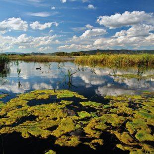 En los Ojos del Guadiana el agua aflora formando un rosario de lagunas que componen las Tablas de Daimiel  (ANTONIO REAL HURTADO)