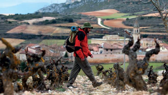 Un peregrino camina entre las viñas de Salinillas de Buradón.  ()
