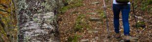 El camino de Espinavell a Molló atraviesa un colorido bosque mixto que puede disfrutarse en Costabona.  (Jordi Longás)
