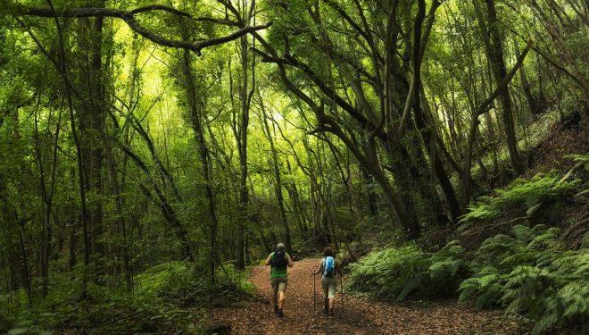 Tramo de sendero del recorrido de La Palma  (La Palma