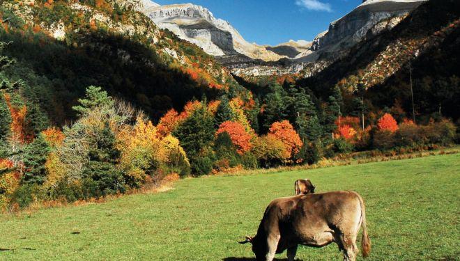Vista general del valle de Aragüés del Puerto, en los bosques de Labati en Huesca