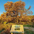 Roble Acarradero o Romanejo, árbol singular, con 500 años de edad el quejigo más grande de Extremadura.