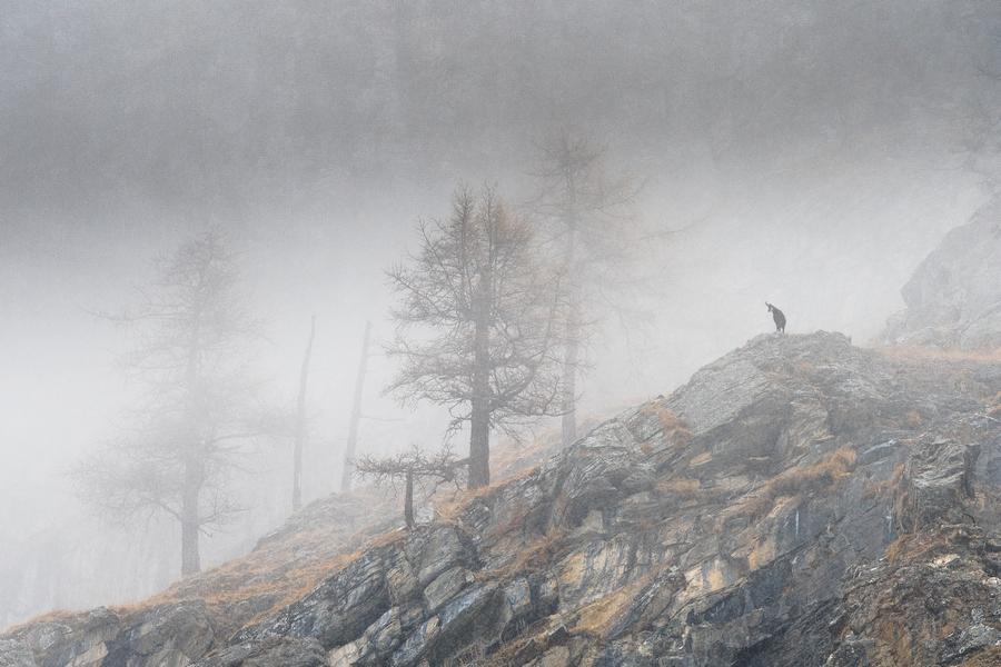 """""""Guardians of vertical realms"""" por Marco Ronconi. Ganador categoría: Tema del año. Parques nacionales."""