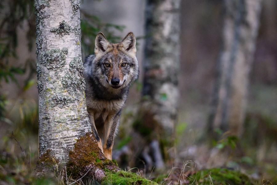 """""""Hide-N-Seek"""" por Lasse Kurkela. Ganador categoría: Premio concursante novel."""