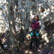 Sector Eoloceno Sur, donde no se han cortado los árboles que no ocasionaban un peligro
