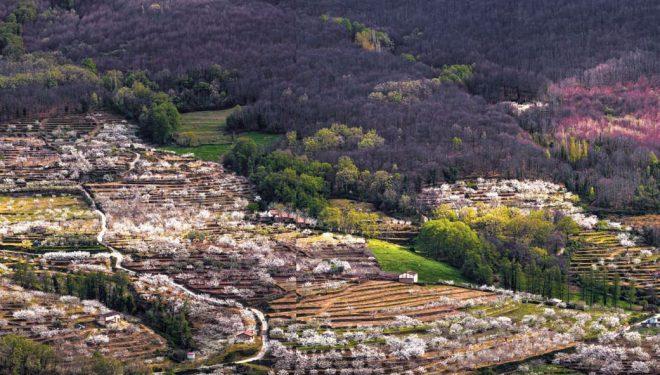 Valle del Jerte, valle del gozo