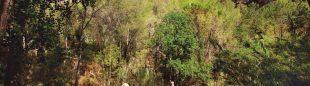 Espadán-Mijares, 15 pueblos en una sola ruta