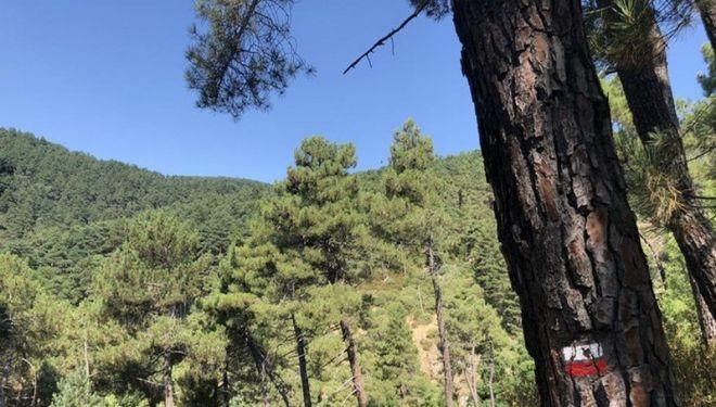El Buen Monte del Oso.