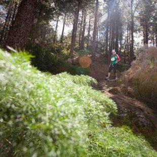 Las Islas Canarias es una de las zonas con más carreras por montaña  (Organización)