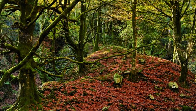 Hayedo de la Biescona en la Sierra de Sueve  (Antonio Rodríguez)