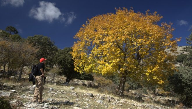 Aceral de Sierra Seca  ()
