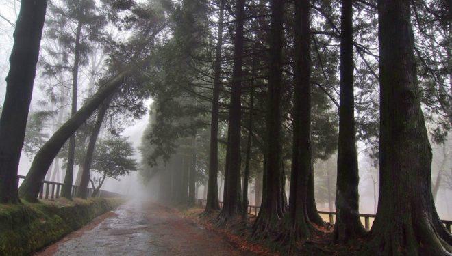 Ruta por el Lago Castiñeiras en la Península del Morrazo.  (Anxo Rial)