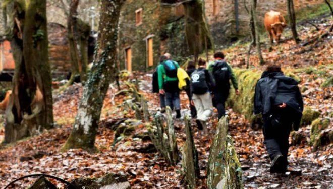 Llegada a la localidad de Vilar entre un bosque de castaños centenarios. Ruta de Soutos del valle de Lor.  (Víctor Barro)