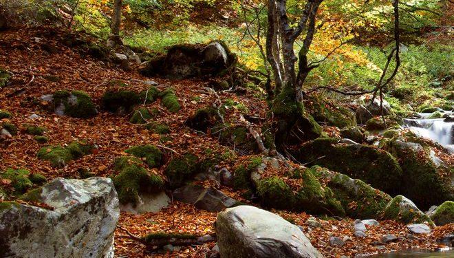 La combinación del bosque otoñal con los pequeños saltos del río Urbión proporciona imágenes de gran belleza que retan a la habilidad de los fotógrafos.  (Daniel Muñoz)