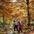 La senda nos conduce por un hayedo magníficamente conservado que en otoño despliega todo su esplendor.  (Daniel Muñoz)