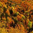Los bosques del barranco del Chate son el prototipo de la selva mixta pirenaica.  (Eduardo Viñuales Cobos)