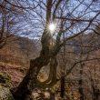 Ruta del Tabayon del Mongallu Asturias ( CASO ) Monumento Natural - Parque Natural de Redes - Reserva de la Biosfera. (Finalista del concurso Caminar tiene premio con Suunto)  (Olaya Álvarez)