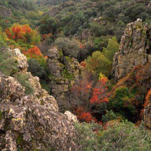Vegetación propia de la zona de Abedular de Riofrío