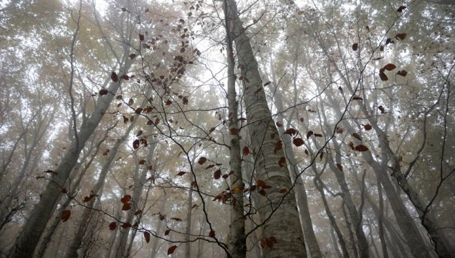 Flora perteneciente al Bosque de Sarastarri