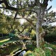 Bosques de Augas Santas en Allariz