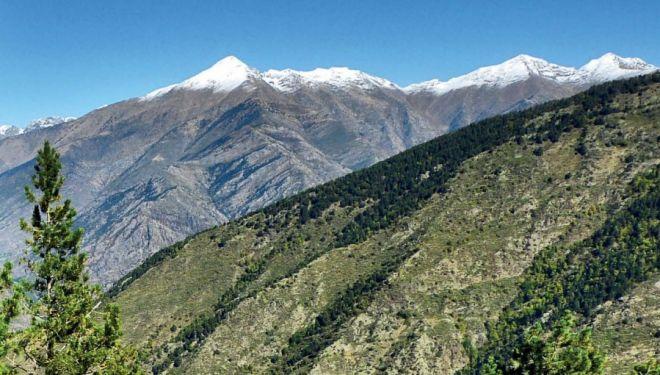 Bosque de Virós en el Vall Ferrera, Lleida