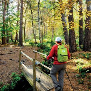 La Ruta del hayedo de Peñarrajada se puede enlazar con la parte aragonesa de la montaña del Moncayo, donde hay un sendero botánico.