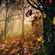 Otoño en los bosques de San Martín de los Oscos